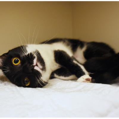 Cat ownership in progress: One of Kalisi's adoption photos