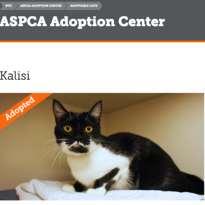Screenshot from the ASPCA adoption page following Kalisi's adoption