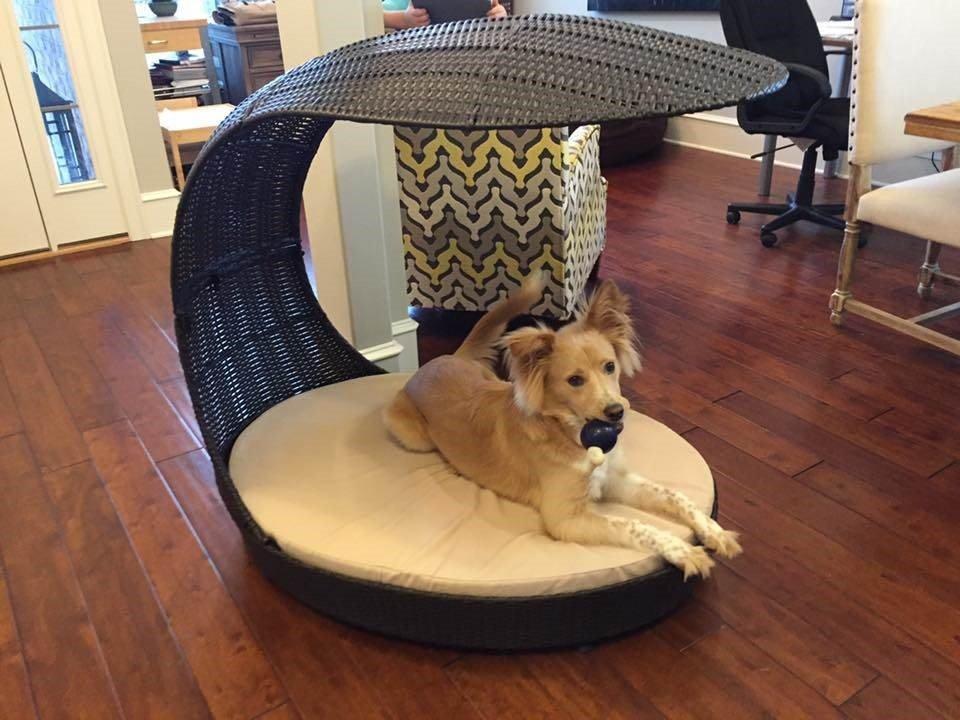 Evie, Newton's Dog