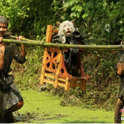 """Guizhou Residents Carrying a Dog on A Throne for """"Dog Carrying Day"""""""