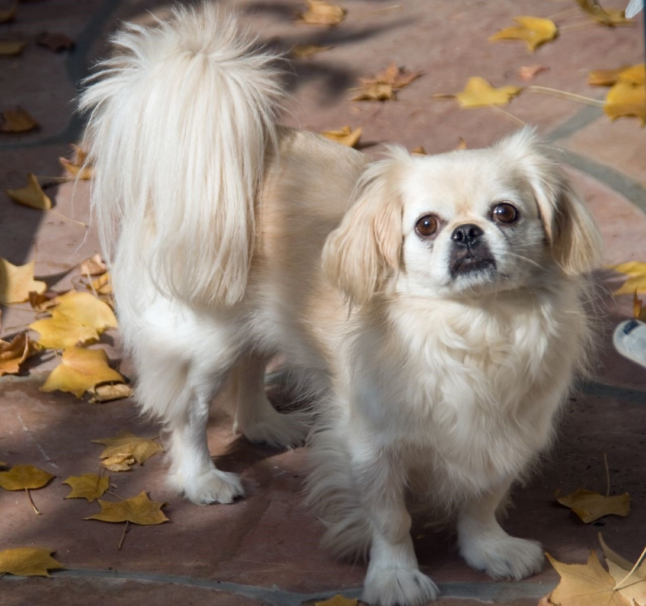 best apartment dogs for smaller spaces - bone & yarn