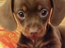 This is the main image for the cute puppy pics post