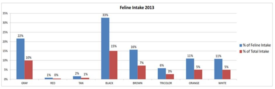 Total intake of cats for 2013