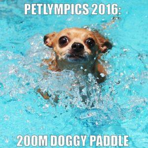 Petlympics Doggy Paddle