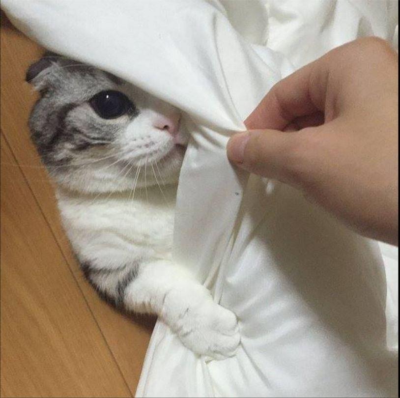 Facebook AILU Cat House Club