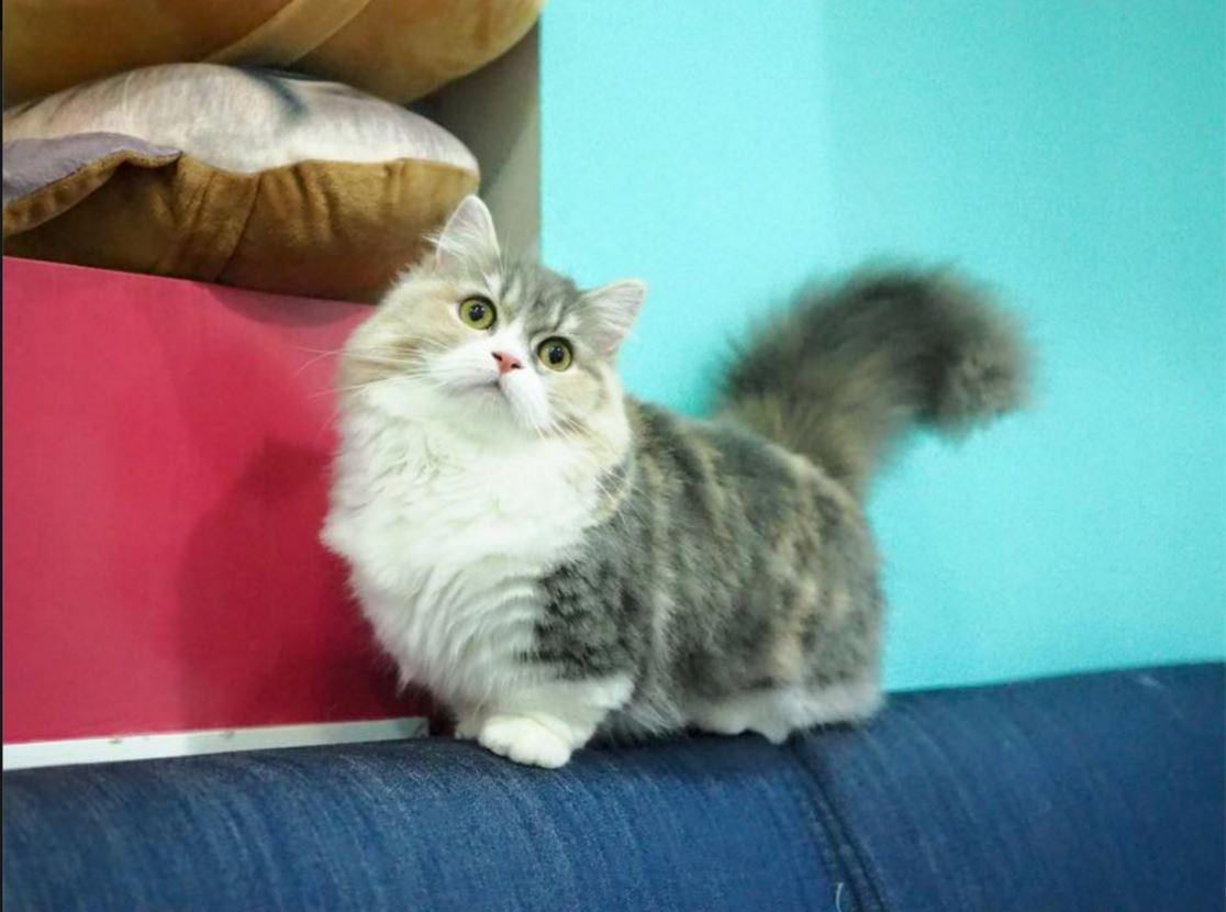 Facebook - Khonkaen Cattery