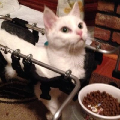 Special cats often have health conditions