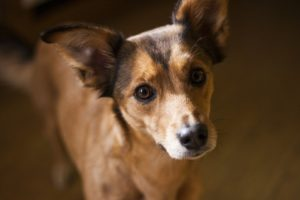 Dogs understand humans better than we may have thought