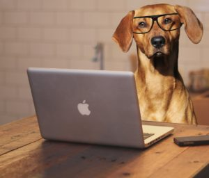 Pet-related blogs are important resources for everyone who loves animals