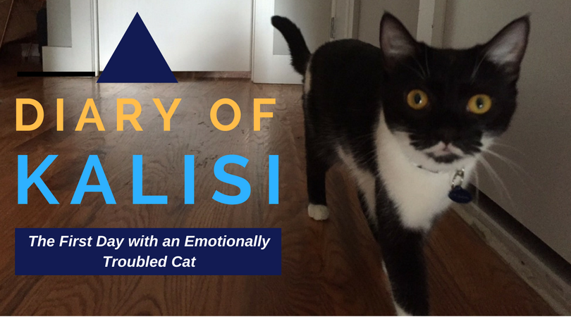 Diary of Kalisi: The First Day with an Emotionally-Troubled Cat