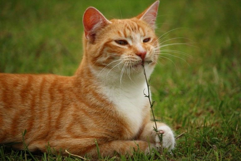High-Fiber cat foods aren't always what you think