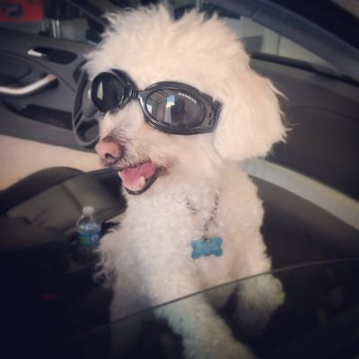 Every pup in Doggles knows they look fantastic