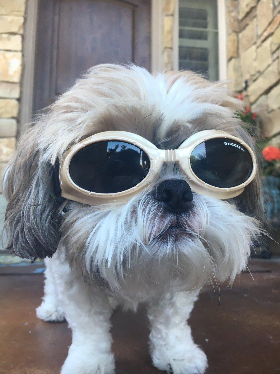 Dog wearing Doggles 1