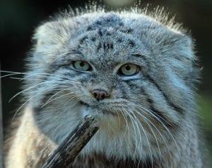 Elderly Cat