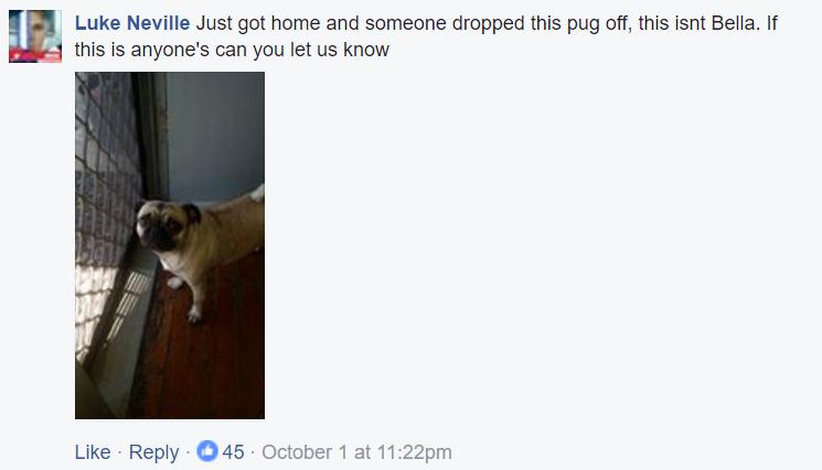 lost-pug-1