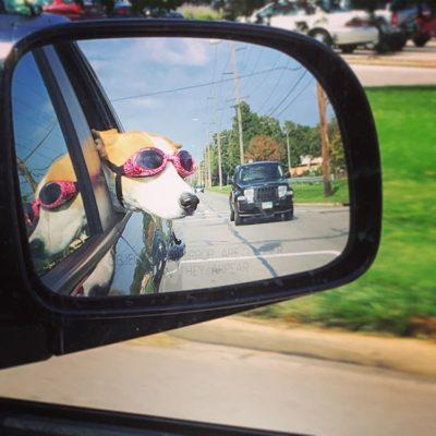 Miss Maya makes those pink Doggles look stunning