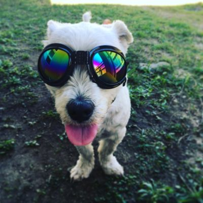 Doggles even come in reflective finishes!