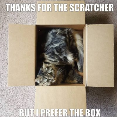 Cats will often choose boxes over expensive toys