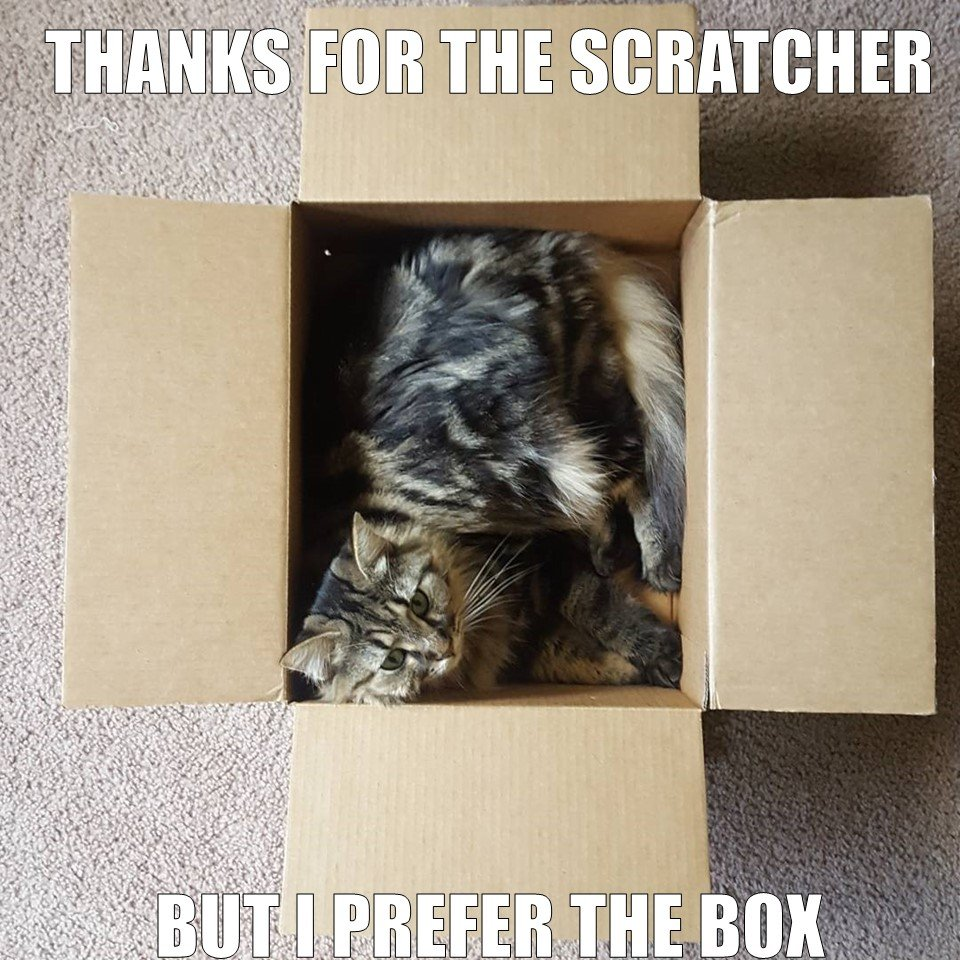 """Cat Meme that says """"Thanks for the scratcher but I prefer the box"""""""