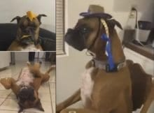 Dog doing the mannequin challenge in different positions