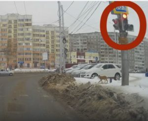 Law-abiding dog in Russia
