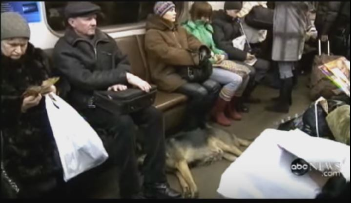 Dog riding on the subway in Moscow