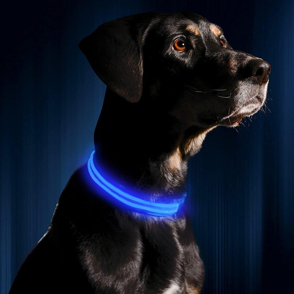 Illumiseen LED Dog Collar Unique Dog Gift