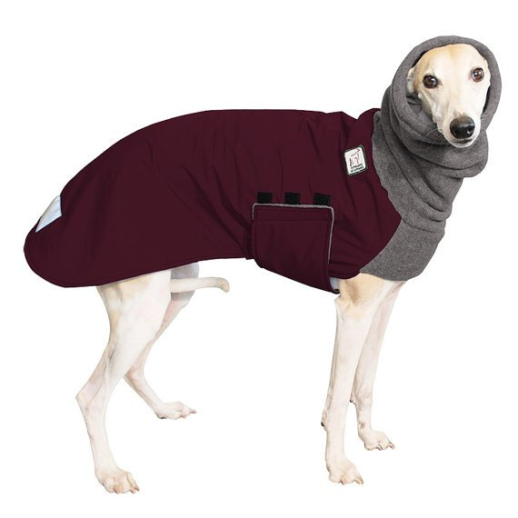 Stylish Whippet Coat from Unique Dog Products Post