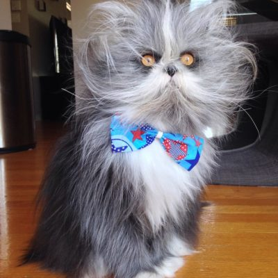Atchoum in a blue and red bowtie