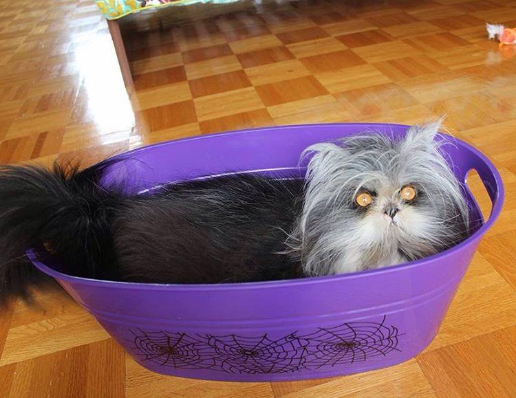 Atchoum in a tub