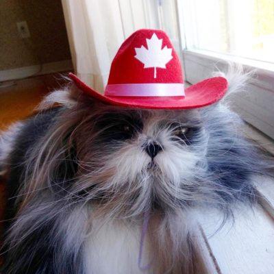 Atchoum in a Canadian Maple Leaf Ranger hat
