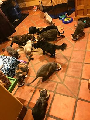 Feeding Time at Peter Cohen's House