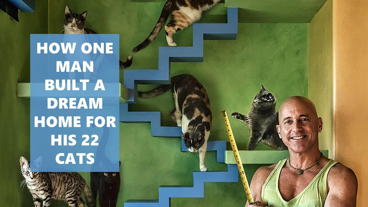 How one man built a dream home for his 22 cats