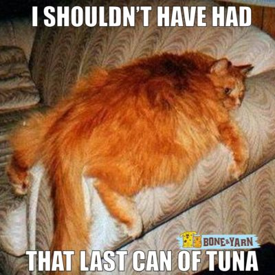 Feline obesity is a major problem for cats