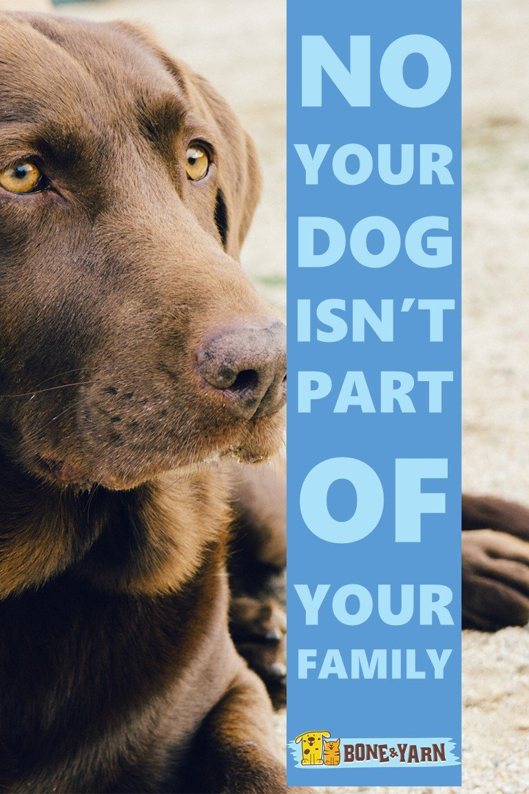 Title Slide for Article Your Dog Isn't Part of your family