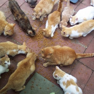 Figuring how much to feed a cat when you have many can get tricky