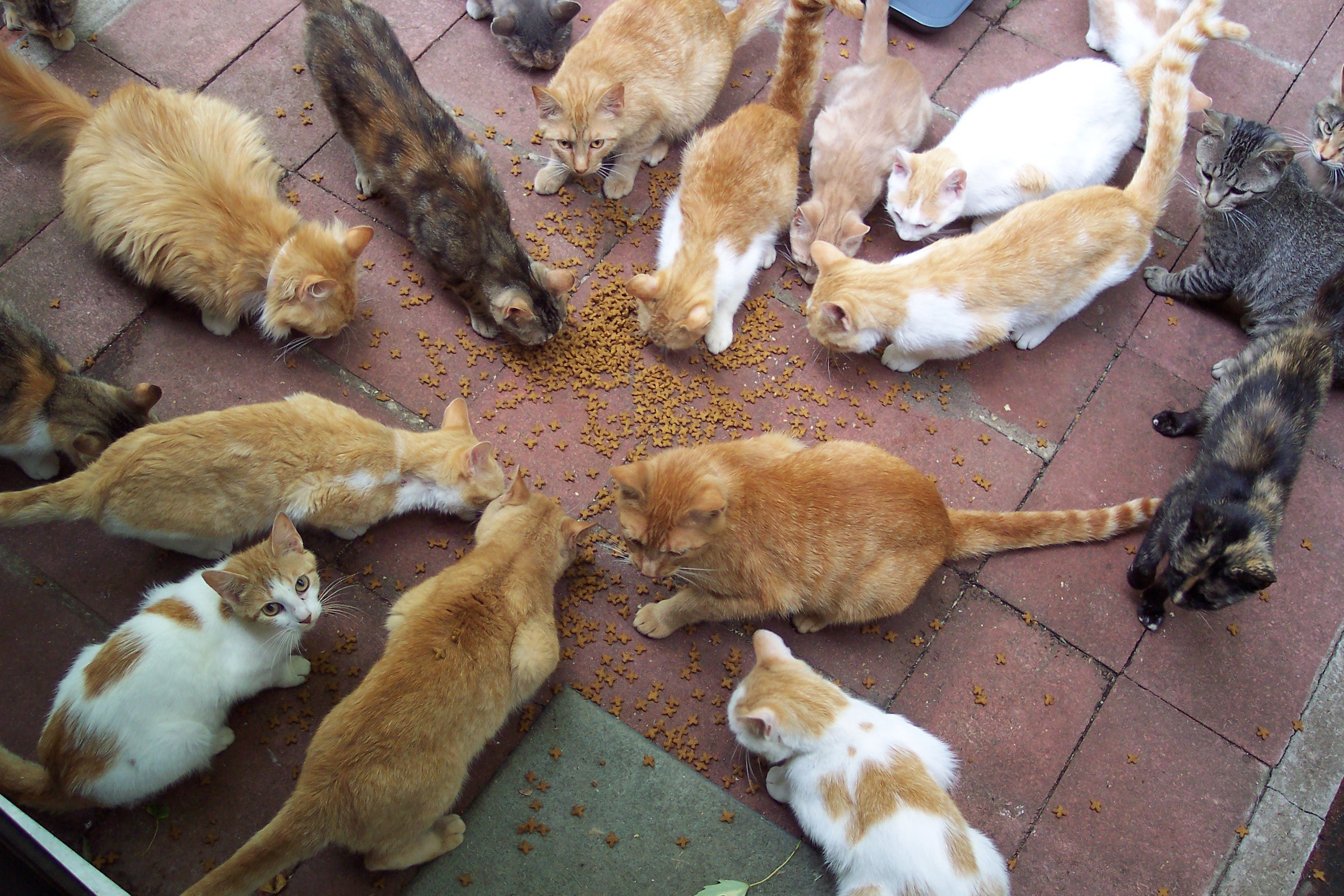 Multi-cat feeding