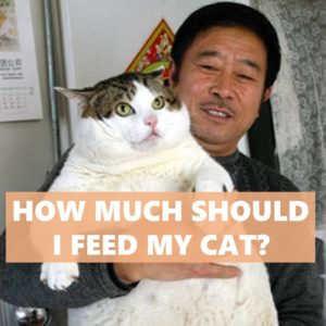 """""""How much should I feed my cat?"""" is a common question"""