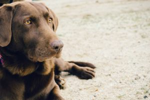 Dogs are part of the family - or are they?