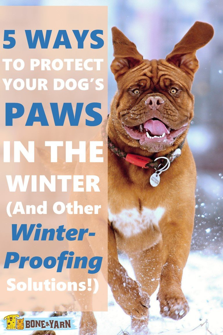 5 Ways to Protect a Dog's Paws in Winter (And Other Winter-Proof Ideas!)