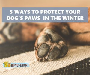Protect a dog's paws in harsh winter conditions