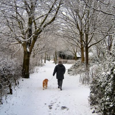 Protect a dog's paws from icy conditions by walking in the daylight