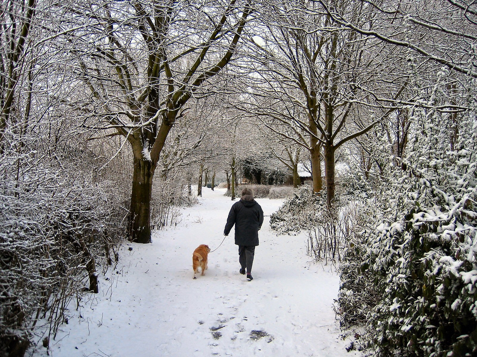 Walking a do during the day in the snow