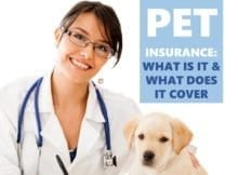 Pet Insurance: What is it and what does it cover?
