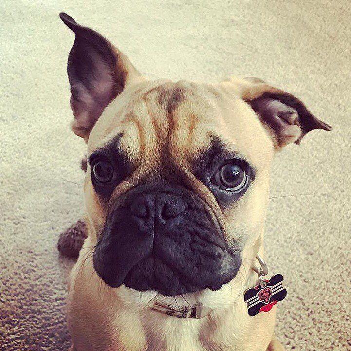 Can I Bathe My Dog Weekly
