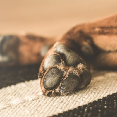 Your dog's paws undergo a lot of abuse during the winter months
