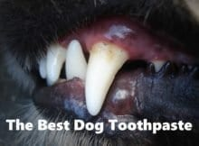 Best Dog Toothpaste Cover
