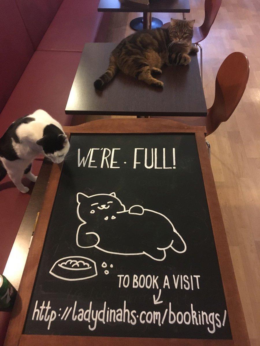 Lady Dinah's Cat Emporium Cat Cafe