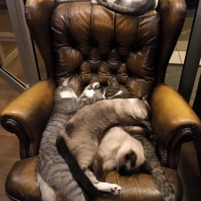 Les Cafe Des Chats Cat Cafe