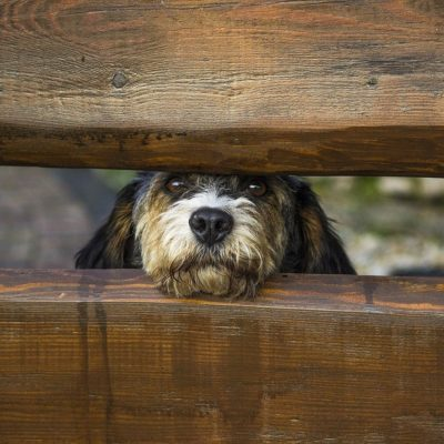 Wet dog noses help them scent the world around them